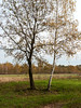 Black and white (elkarrde) Tags: nature landscape morning trees grass countryside forest sky autumn october 2017 pentax k20d pentaxk20d camera:brand=pentax lens:brand=pentax camera:mount=kaf3 camera:format=apsc camera:model=k20d lens:mount=kaf2 lens:maxaperture=3556 fa2890 lens:focallength=2890mm lens:model=smcpentaxfa135562890mm smcpentaxfa2890mmf3556 pentaxfa2890 2890 lens:format=135 smcpentaxfa135562890mm croatia location:country=croatia desinec birch meadow field leaves autumn2017 october2017 twop pentaxart justpentax sunday sundaymorning digital mediumdigital