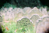 Pet Sematary, Hyde Park (puppyhand) Tags: pet pets cemetery grave graves graveyard london england hyde park autumn 2017 headstone tombstone gravestone royal parks private dead death gyp cyp green grass faithful true 1896