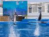 OCEANOGRÀFIC 20 (Sachada2010) Tags: sachada sachada2010 javier martin olympus epl6 valencia micro 43 panasonic 14mm zuiko 8mm 45mm f18 40150mm r oceanografic fondo marino delfines dolphins 9mm fisheye