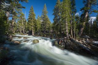 Yosemite ... Slicing Through the Woods