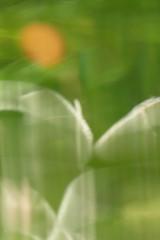 Herbst - Pastell II (Don Bello Photography) Tags: herbst 2017 pastell feldbergerseenlandschaft grün acdsee fz1000 panasonicphotographer panasonicfz1000 lumixphotographer lumixfz1000 reinhardbellmann donbello donbellophotography 2000views 50favorites 1000views