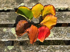 Changing Colours Of Autumn (Marc Sayce) Tags: changing leaves colours fall autumn september 2017 alice holt lodge forest hampshire wrecclesham farnham surrey south downs national park