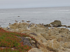 20160817 Californie Pacific Grove - (96) (anhndee) Tags: usa californie california pacificgrove