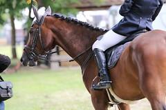 _MG_5905 (dreiwn) Tags: ridingarena reitturnier reiten reitplatz reitverein reitsport ridingclub equestrian showjumping springreiten horse horseback horseriding horseshow pferdesport pferd pony pferde tamronsp70200f28divcusd