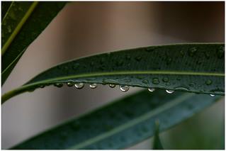 it's raining  finally !!!