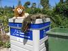 Lion and Crocodile No Longer Needed (pepandtim) Tags: lion crocodile no longer needed toys position rubbish bin basura marbella child lucky 22and99