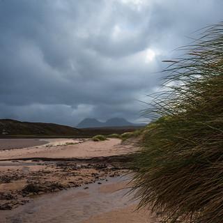 Dune grasses (explored 17/10/17)