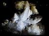 Flor de Yeso 2 (enekopy) Tags: alava zuia espeleo cristales formaciones geotemas yeso flor