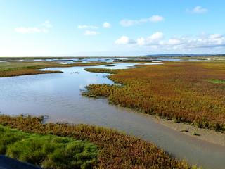 Rye Harbour wetland 1