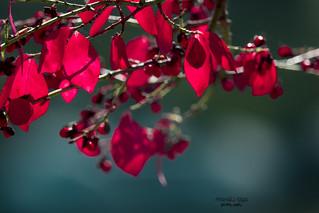 Scarlet October