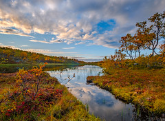 Autumn at Aunfjellet (Reidar Trekkvold) Tags: xf1024ois aunfjellet autumn forest fujifilm harstad høst landscape natur nature nordnorge norway sommer summer troms vann water xt2