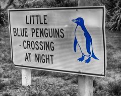 Careful with the blue! Lower Hutt, NZ. (gabrielfiuza) Tags: newzealand penguins blackandwhite blue road sign texture wellington board lower hutt
