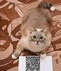 #cat #donate #bitcoin #ethereum #qrcode #qr_code (gordiv) Tags: qrcode donate cat bitcoin ethereum