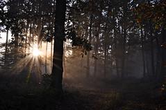 (Uli He - Fotofee) Tags: ulrike ulrikehe uli ulihe ulrikehergert hergert nikon nikond90 fotofee oktober herbst 2017 wald plätzer burghaun licht sonne sonnenaufgang nebel