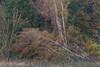colours of autumn (IIIfbIII) Tags: colors nature autumn light baum trees müritznationalpark mecklenburg green