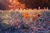 (frogghyyy) Tags: bokeh dof autumn fall foliage light nature canoneos1000d 55250 macro macronature