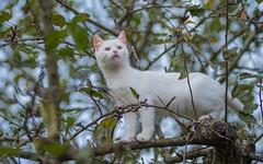 Katty (02) (Vlado Ferenčić) Tags: katty kitty catsdogs cats animals animalplanet vladoferencic zagorje vladimirferencic hrvatska croatia nikond600 nikkor8020028