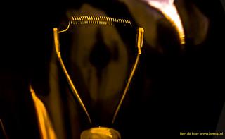 Sprial of a light bulb