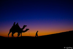 Miles to Go (ujjal dey) Tags: thor rajasthan jaisalmer sam dune desert sunset silhouette blue hues travelgram travel instagram fujifilm xe2s mirrorless camel evening xseries tourist wait watching golden yourshot yourshotindia milestogo ujjaldey colors colours