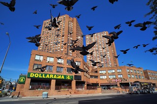 Attack of the hungry pigeons..