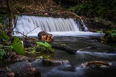 Craigmill Den (daedmike) Tags: waterfall weir scotland carnoustie angus panmure mill cornmill stream burn twigs leaves longexposure craigmillden autumn nature