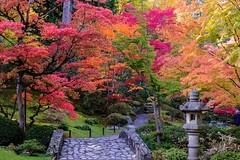 Japanese Garden (otterdrivernw) Tags: xf18135 xt2 fujinon fuji fujifilm autumn fallcolor maple garden japanese seattle