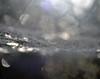 droplets in a web {explored} (conall..) Tags: web backlit droplets dew rain drops spider macro bokeh dof narrow field focus