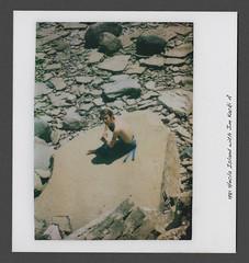 1977 Heckla Island 01 (arbutushilldesign) Tags: jimkacki jonfeir heclaisland 1981