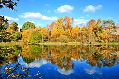 Autumn at Plantsbrook (GVG Imaging) Tags: plantsbrooklocalnaturereserve waterreflections bluesky autumncolours d3 sigma2870mmf28