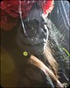 Día de muertos (Eriick Stheez) Tags: tradición 60d canon mexico luz mujer chica araña telaraña telarañas fantasma muertos de día catrina calavera