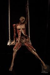 Anatomical exhibition (Monika Kalczuga (on&off)) Tags: anatomy body exhibition exploring controversial human