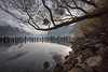 Walensee (andgot1) Tags: lake water see swiss natur natureza nevoeiro outuno moorning tree trees landscape paisagens switzerland