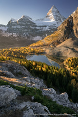 Matternhorn of the Rockies (David Swindler (ActionPhotoTours.com)) Tags: autumn nublet mtassiniboine sunrise assiniboine mountassiniboine larch britishcolumbia fall canada