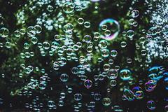 St. James's Park (JavierAndrés) Tags: burbujas bubbles parque park verde green color colores colors bokeh depthoffield profundidaddecampo dof pdc nature naturaleza stjamesspark londres london england inglaterra reinounido unitedkingdom viaje viajar travel trip mood moody atmósfera atmosphere ciudad city 50mm f14 14 d800 nikon nikkor