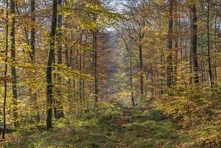 *Herbst im Eifelwald*