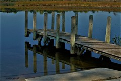 Reflected Dock (SCOTTS WORLD) Tags: adventure architecture america angle water weathered woods weeds light leaves lake landscape lakesixteen lilypads oaklandcounty orion panasonic pov perspective park fun fall shadow sky summer 2017 clouds country reflection wet michigan midwest digital dilapidated detail dock