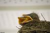 awakening. (NickPensaPhotography) Tags: bird birds nature nest babybirds birdsnest frontporch frontporchbirds wildlife instagramapp squareformat art nikon travel square photography