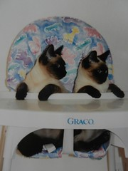 We are Siamese (Thong Bartlett) Tags: siamese highchair