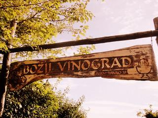 Božji vinograd