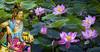 觀音 莲花 (Mig_T_One) Tags: 觀世音菩薩 观世音 观自在菩萨 如意観音 水月觀音 观自在 南海觀音菩薩 南無大悲觀世音菩薩 自在觀音 一叶觀音菩薩 净瓶观音 觀音锦鲤 avalokitesvara bodhisattva kwanyin guanyin goddessofmercy mythologicalfigures buddhism buddhist lotusflower lotusleaf