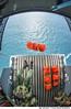 Lançamento de bote (Força Aérea Brasileira - Página Oficial) Tags: 2015 brazilianairforce buscaesalvamento carranca fab forcaaereabrasileira forçaaéreabrasileira fotojohnsonbarros johnsonbarros operacaocarrancaiv rampa bote lancamento florianópolis sc brazil bra
