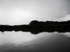 Lago do Parque Barigui (Eduardo PA) Tags: lago do parque barigui curitiba paraná nokia pureview microsoft windows phone 950xl lumia wp