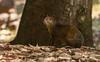 Cutia (izaletetavares) Tags: cutia mammal animals animais animal ambiente amazing animalplanet avifauna árvore fauna flora free foto flickr fofo selvagem cool canon canont3i cute vida verde vidaselvagem wildlife wild wildlifephotography world wildife wildlifephoto wildnature brasil nature natureza naturephotography naturephotos new nice nationalgeographic national natural nanatureza meioambiente mato mamífero livre life liberdade izaletetavares photo photography preservação photos preserve green goiás galhos