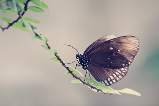 butterfly on a twig