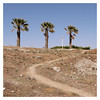 Three palm trees (awbaganz) Tags: landscape nature path palm tree hill greece rhodes island greekisland hella aegean panasonic lx100