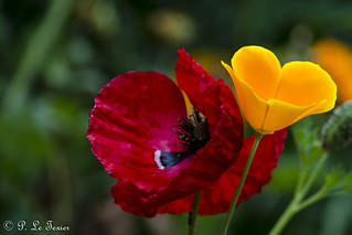 Fleurs 012