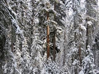 Brown-Lowery Provincial Park winter hike - Winter wonderland 8