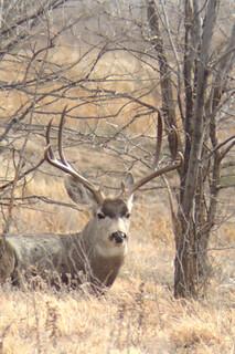 Texas Free Range Hunt – Palo Dura Canyon 23
