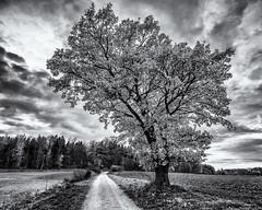 Resisting Leaves... (Ody on the mount) Tags: anlässe blätter bäume em5ii fototour himmel mzuiko918 omd olympus pflanzen schwäbischealb silhouette solitär wolken bw clouds leaves monochrome sw tree