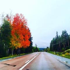 Going north 🌳🍁  * 🍂🍂🍂🍂🍂🍂  *  #Jämtland #Sverige #ig_sverige #ig_jämtland #september #road #E14 #Sweden #Schweden #Svezia #europa #ig_myshot #picofthday (Per Ola Wiberg ~ powi is back) Tags: instagramapp square squareformat iphoneography uploaded:by=instagram clarendon